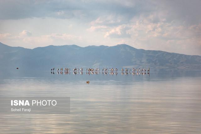 فلامینگو های دریاچه ارومیه
