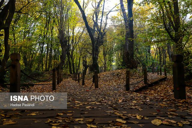 ایران زیباست؛ پاییز در جنگلهای النگدره شهر گرگان