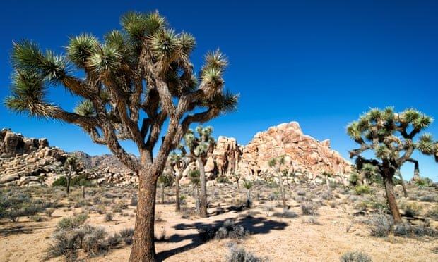 پارک ملی جاشوا تری آمریکا کالیفرنیا