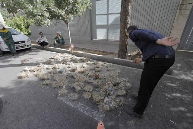 تخریب لانه پرندگان