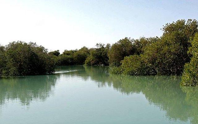 جنگل مانگرو