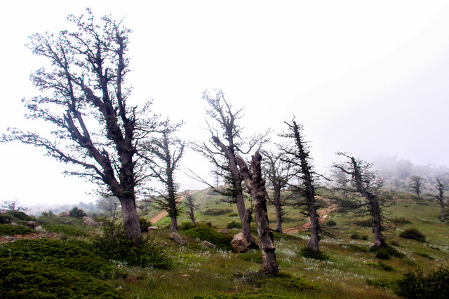 طبیعت زیبای جنگل ابر - شاهرود