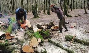 تخریب منابع طبیعی
