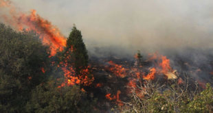 آتش سوزی در شهرستان گچساران