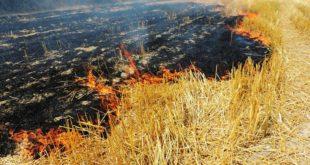 آتشسوزی در پارکهای جنگلی سنندج