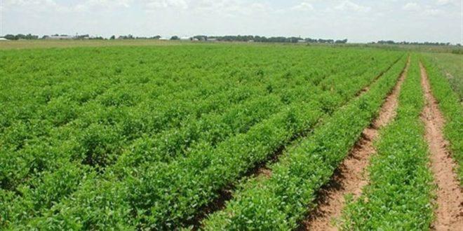 توسعه محصولات کشاورزی