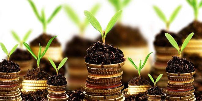 درآمدزایی گیاهان دارویی
