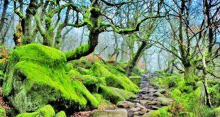 تور جنگل متروکه