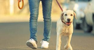سگگردانی