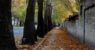 درختان کهنسال خمینیشهر