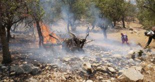آتش سوزی جنگل های گچساران