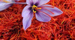 توسعه صادرات زعفران