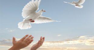 آزادی ۷ زندانی