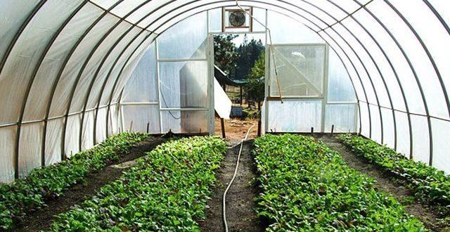 Cultivation of medicinal plants