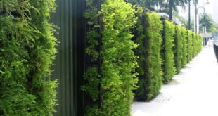 دیوارهای سبز شهر