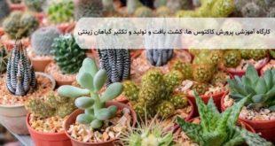 تولید و تکثیر گیاهان زینتی
