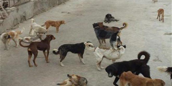 سگ ولگرد