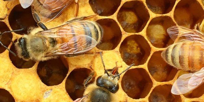 کندوهای زنبور عسل