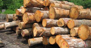 Trafficking in wood