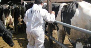 تولید شیرخام مرغوب