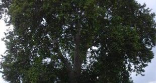 ابلاغ مراتب ثبت 3 اثر میراثطبیعی به استاندار زنجان