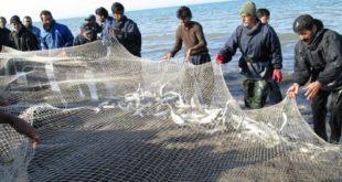 صید ۹۳۱تُن انواع ماهیان استخوانی در مازندران
