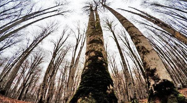 تور یکروزه جنگل راش