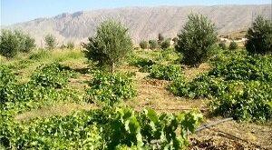 توسعه باغات