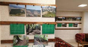 برپایی نمایشگاه عکس «جنگل در جدال»
