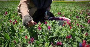 بازار گیاهان دارویی