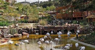 باغ وحش، باغ پرندگان و بازار پرندگان مشهد تعطیل شد