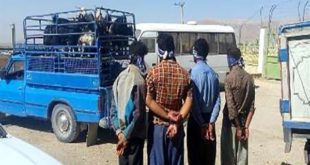 دستگیری باند سارقان مسلح احشام