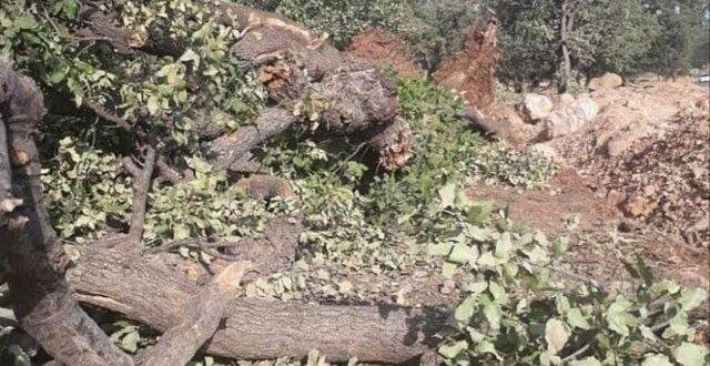 سقوط ۳۴ درخت در پی وزش باد و بارندگیهای اخیر در زاهدان