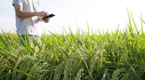 مزیت کشاورزی